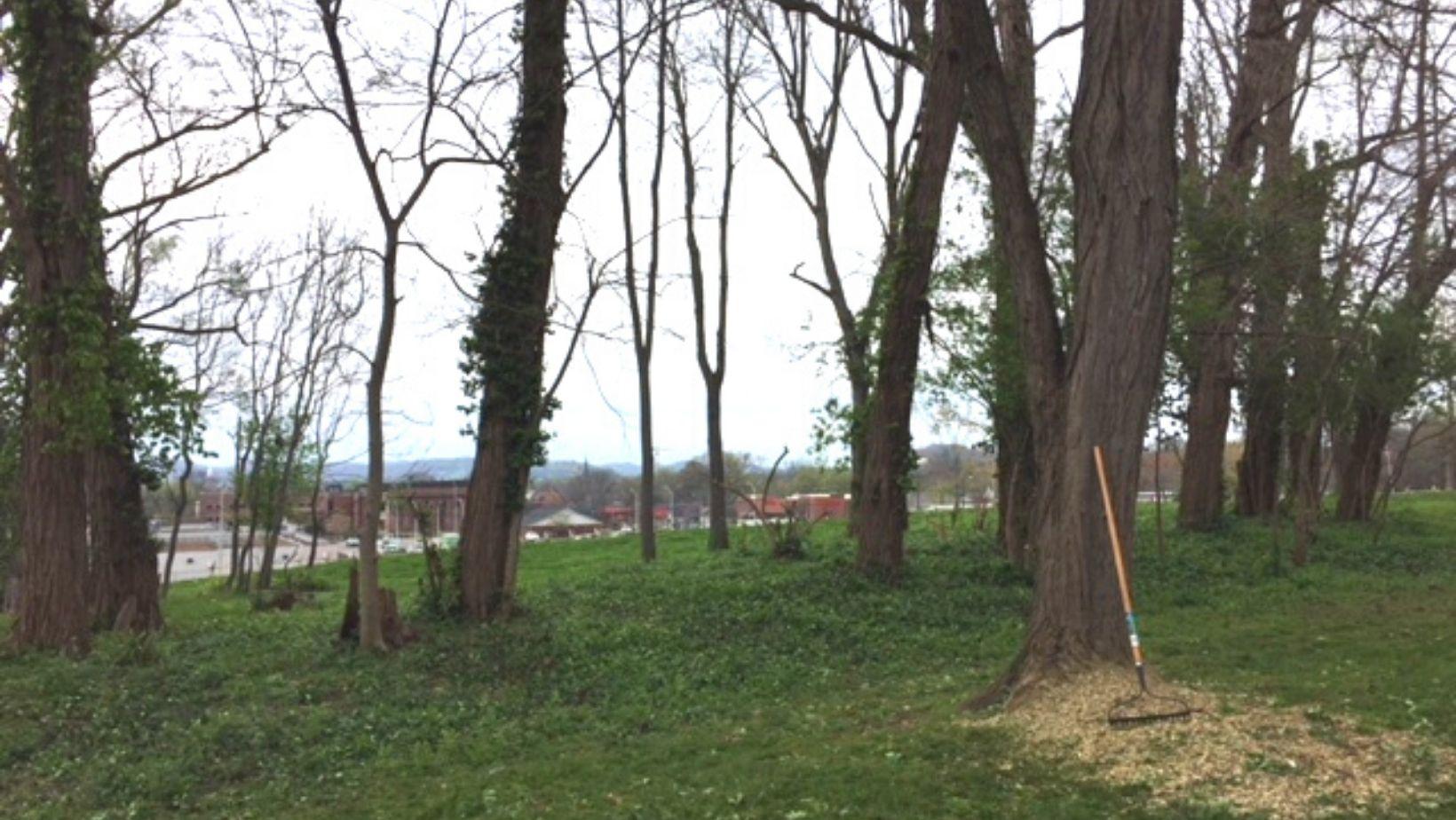 Volunteer work at Carter House clearing leaves